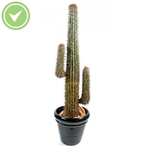 Cactus Mexico Cactée artificielle