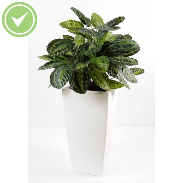 calathea roseopicta plante verte artificielle maison et fleurs. Black Bedroom Furniture Sets. Home Design Ideas