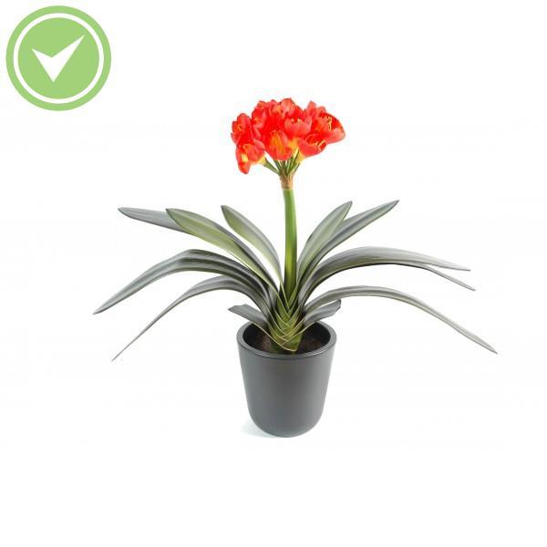Clivia 16fl plante artificielle fleurie maison et fleurs for Plantes artificielles terrasse