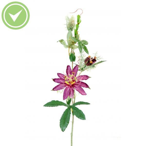 Plante Interieur A Fleur Maison Et Fleurs
