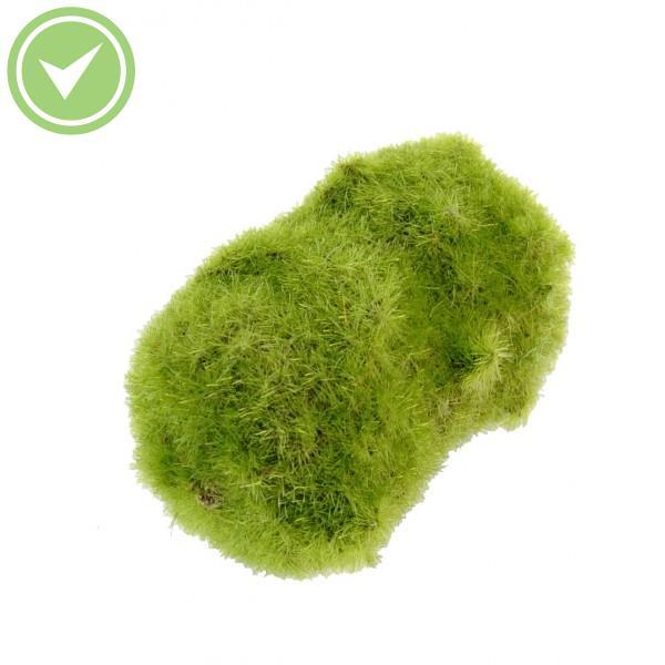 Mousse artificielle en rouleau maison et fleurs for Plante verte fausse