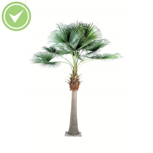 palmier exterieur pas cher