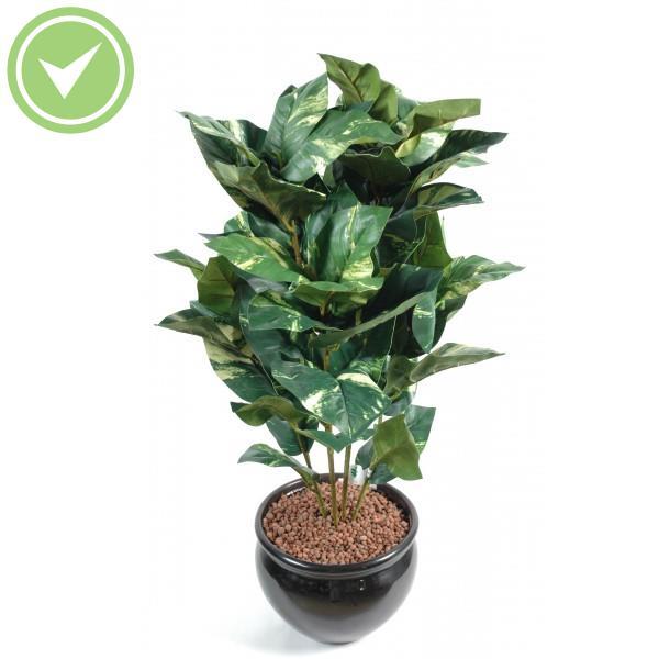 Plante verte d 39 int rieur pas cher maison et fleurs for Plante verte fausse