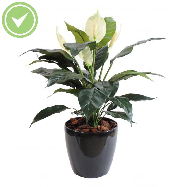Plante verte d 39 int rieur tombante maison et fleurs for Plante appartement