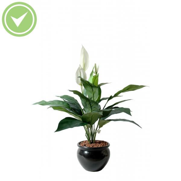 Plante verte d 39 int rieur tombante maison et fleurs for Plante verte tombante