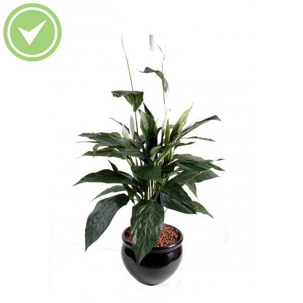 Plante verte interieur tombante for Plante verte tombante interieur